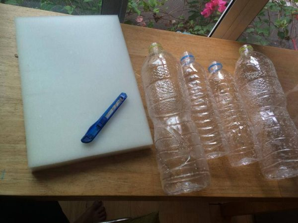 growing plant in bottle diy (1)