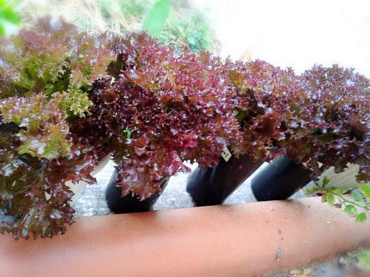 growing plant in bottle diy (6)