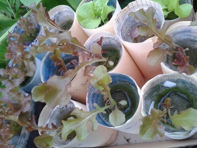 growing plant in bottle diy (9)