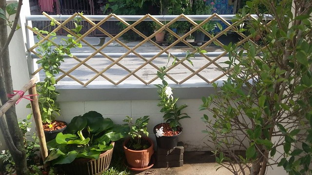 small space sideyard garden review (11)
