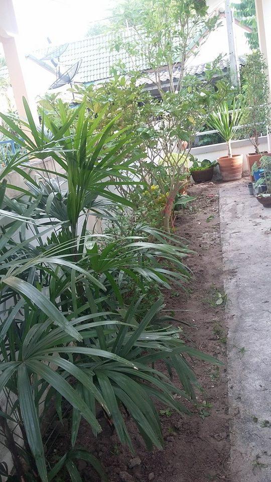 small space sideyard garden review (6)