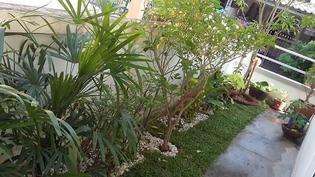 small space sideyard garden review (8)