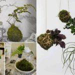 """ชวนปลูกต้นไม้สไตล์ญี่ปุ่น """"โคเกะดะมะ"""" ศิลปะสีเขียวขนาดจิ๋ว ทำเองแบบชิลล์ๆ ด้วยขั้นตอนที่ง่ายกว่าที่คิด!!"""