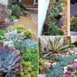 """16 ไอเดีย จัดสวนสวยด้วย """"พืชอวบน้ำ"""" เติมความสดชื่นให้เต็มอณูพื้นที่ ด้วยต้นไม้ไซส์จิ๋ว"""