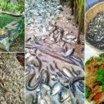 วิธีเลี้ยงปลาซิวเพื่อประกอบอาชีพ เลี้ยงง่าย ใช้พื้นที่ไม่มาก เปิดโอกาสสร้างรายได้อย่างยั่งยืน