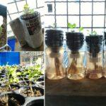 "DIY ลดโลกร้อน ""วิธีปลูกพืชในขวดพลาสติก"" ไม่ต้องเสียเวลารดน้ำบ่อย เหมาะสำหรับคนอยู่ไม่ติดบ้าน"