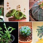 15 พืชรูปทรงแปลก แต่แฝงด้วยความสวยงาม เหมาะสำหรับเอามาแต่งบ้าน สร้างความน่ารักให้กับห้องของเรา