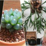 พาไปรู้จัก 15 พืชรูปทรงแปลกตา แต่มีความสวยงามจนน่าเอามาแต่งบ้าน