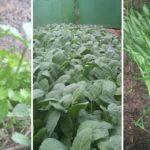 """รีวิว """"ปลูกผักในสวนหลังบ้าน"""" ปลอดภัยไร้สารเคมี แถมช่วยสร้างรายได้ให้ครอบครัว"""