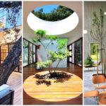 13 ไอเดีย ต้นไม้ใหญ่ในอาคาร สร้างบรรยากาศแบบป่าไม้ ให้กับพื้นที่ภายในแบบเต็มๆ