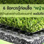 """6 ข้อควรรู้ก่อนซื้อ """"หญ้าเทียม"""" ให้บ้านสวยถูกใจอย่างเป็นธรรมชาติ แบบไม่ต้องดูแลเยอะ"""