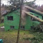 อุทาหรณ์!! ชายหนุ่มสองคน ตัดต้นไม้ใหญ่โดยไม่ระวัง ล้มทับหลังคาบ้านได้รับความเสียหาย โชคดีไร้คนบาดเจ็บ