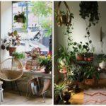 4 เคล็ดไม่ลับ ดูแลต้นไม้ในบ้าน ให้สีเขียวสะพรั่งอยู่นาน สดชื่นไม่เสื่อมคลาย