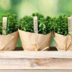 12 'พืชผักสวนครัว' ที่ปลูกได้ในบ้านง่ายๆ ได้ทั้งความสวยงาม และวัตถุดิบอาหารปลอดสารพิษ