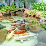 31 ไอเดียตกแต่งบ่อปลา สร้างบรรยากาศธรรมชาติให้กับพื้นที่ภายในบ้าน