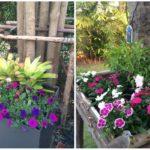 จัดสวนน้อยในรั้วบ้าน เพิ่มสีสัน และความสดชื่น ความสุขเล็กๆ ของคนรักธรรมชาติ ด้วยงบเพียง 250 บาท