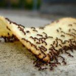 8 วิธีกำจัดมดออกจากบ้าน โดยไม่ใช้สารเคมี หมดปัญหาแมลงตัวน้อยกวนใจในครัวเรือน