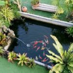 เพิ่มพื้นที่พักผ่อนสุดโปรดในบ้าน ด้วย 'บ่อปลาคาร์ฟ' สร้างเองง่ายๆ ด้วยงบเพียง 5 พันบาท