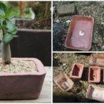 แชร์ไอเดีย DIY กระถางต้นไม้ จากกล่องข้าวพลาสติก ขั้นตอนทำง่าย ใช้อุปกรณ์น้อยชิ้น