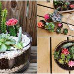 แบ่งปันไอเดีย DIY 'สวนแคคตัสในโหลแก้ว' จัดสวนเล็กๆ สุดชิค ตามแบบฉบับฮิปสเตอร์