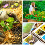 13 เคล็ดลับที่ช่วยให้การจัดสวนง่ายขึ้น เพื่อสวนหลังบ้านที่สวยงามเพลิดเพลินใจ