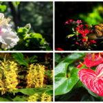 """แนะนำ 14 """"ดอกไม้เขตร้อน"""" เพิ่มสีสันและกลิ่นหอมหวนให้สวนหลังบ้าน"""