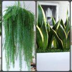 """แนะนำ 7 ต้นไม้สำหรับ """"ปลูกในบ้าน"""" ช่วยคลายร้อน ปรับลดอุณภูมิ พร้อมขจัดมลพิษ"""
