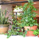 7 ต้นไม้สำหรับปลูกในบ้าน ช่วยคลายร้อน ปรับลดอุณภูมิพร้อมขจัดมลพิษ