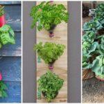 """29 ไอเดีย DIY """"แปลงปลูกผักสวนครัว"""" เนรมิตจากวัสดุรีไซเคิล ปลูกผักทานเองได้โดยไม้ต้องใช้พื้นที่เยอะ"""