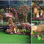 """ชวนชมไอเดียจัดสวน """"สับปะรดสี"""" สร้างพื้นที่แห่งความสุข ในบรรยกาศสดชื่นจากไม้งามสีสด"""