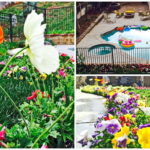 รีวิวจัดสวนสวยด้วยตัวเอง พร้อมสร้างสระว่ายน้ำสวนตัวภายในสวน