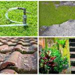 4 วิธีกำจัดตะไคร้น้ำภายในบ้านให้หมดไป สร้างความสะอาด และความปลอดภัยให้กับบ้าน