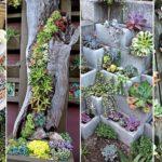 """50 ไอเดีย """"ไม้อวบน้ำ"""" ตกแต่งสวนให้สวยงาม ด้วยพืชพรรณรูปทรงสะดุดตา"""