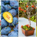 ผลไม้ 8 ชนิด ที่สามารถเพาะได้ง่ายๆ จากเมล็ดจากผลไม้ที่ทานเสร็จแล้ว