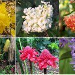 """19 """"พันธุ์ไม้งาม"""" สำหรับจัดสวน สร้างพื้นที่ธรรมชาติในเขตรั้วบ้าน พร้อมความมีชีวิตชีวาจากดอกไม้สีสด"""