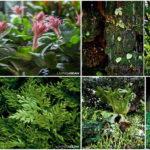 10 พันธุ์ไม้ที่เหมาะกับการจัดสวนสไตล์ป่าฝนเขตร้อน สร้างบรรยากาศที่ผ่อนคลาย และความชุ่มชื่นให้กับบ้าน