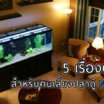 5 เรื่องต้องรู้ สำหรับคนเลี้ยงปลาตู้ NaiBann