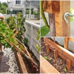 """แชร์ไอเดีย """"ระแนงไม้ปลูกพืชไม้เลื้อย"""" ทำง่ายๆ ด้วยตัวเอง ติดตั้งไว้ข้างรั้วบ้าน เหมาะสำหรับใช้งานในที่แคบ"""