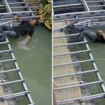 อุทาหรณ์! คนงานก่อสร้างพลัดตกบ่อปลาโดนไฟดูดเกือบตาย โชคดี CPR  รอดชีวิต