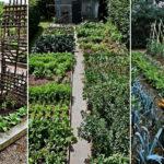 """34 ไอเดีย """"สวนบ้านไร่"""" ปลูกผักกินเอง ใช้ชีวิตใกล้ชิดธรรมชาติอย่างพอเพียงและยั่งยืน"""