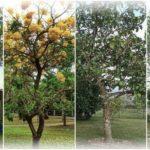 """มาปลูกต้นไม้กันเถอะ!! ต้นไม้ 58 ชนิด ที่สามารถใช้เป็น """"หลักทรัพย์ค้ำประกัน"""" ได้ มีอะไรบ้าง มาดูกันเลย!!"""