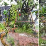 """""""รีโนเวทสวนบ่อปลาคาร์ฟ"""" เปลี่ยนสวนร้อนอบอ้าว ให้เย็นชุ่มชื่นในสไตล์ Tropical Rain Forest"""