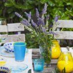 7 พืชไล่ยุง พร้อมกลิ่นหอมจากสมุนไพร ไม่เป็นอันตรายต่อคนในครอบครัว