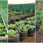 """26 ไอเดีย """"แปลงปลูกผัก"""" จัดระเบียบผักสวนครัวให้สวยงาม เป็นมิตรต่อสายตา"""