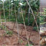"""แชร์ประสบการณ์ """"เกษตรอินทรีย์วิถีมนุษย์เงินเดือน"""" สร้างรายได้จากที่ดินบ้านเกิด ต่อยอดสู่อนาคตที่ยั่งยืน"""