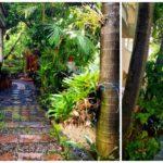 """แจกความสดชื่นด้วยไอเดีย """"จัดสวนพื้นที่แคบ"""" สัมผัสความร่มรื่นจากธรรมชาติได้ในเขตรั้วบ้าน"""