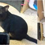 """แชร์ไอเดีย  DIY """"ที่ให้อาหารแมว"""" เพื่อให้เหล่าทาสได้เที่ยวอย่างสบายใจ"""