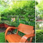 """รีวิว """"สวนในบ้านทาวน์เฮาส์"""" เป็นพื้นที่เล็กๆ นอกบ้าน ให้กลายเป็นมุมสดชื่น รายล้อมด้วยพืชพันธ์นานาชนิด"""