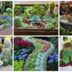 """45 ไอเดียแต่งสวนด้วย """"พืชอวบน้ำ"""" หลากหลายรูปแบบ เพิ่มความสดชื่นต้อนรับบรรยากาศหน้าร้อน"""