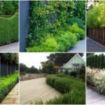 """30 ไอเดีย """"รั้วต้นไม้และไม้เลื้อย"""" แบ่งพื้นที่สวนให้เป็นสัดส่วน สร้างความเป็นส่วนตัวให้กับการใช้ชีวิต"""
